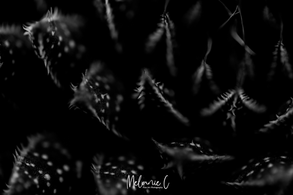 black and white cacti
