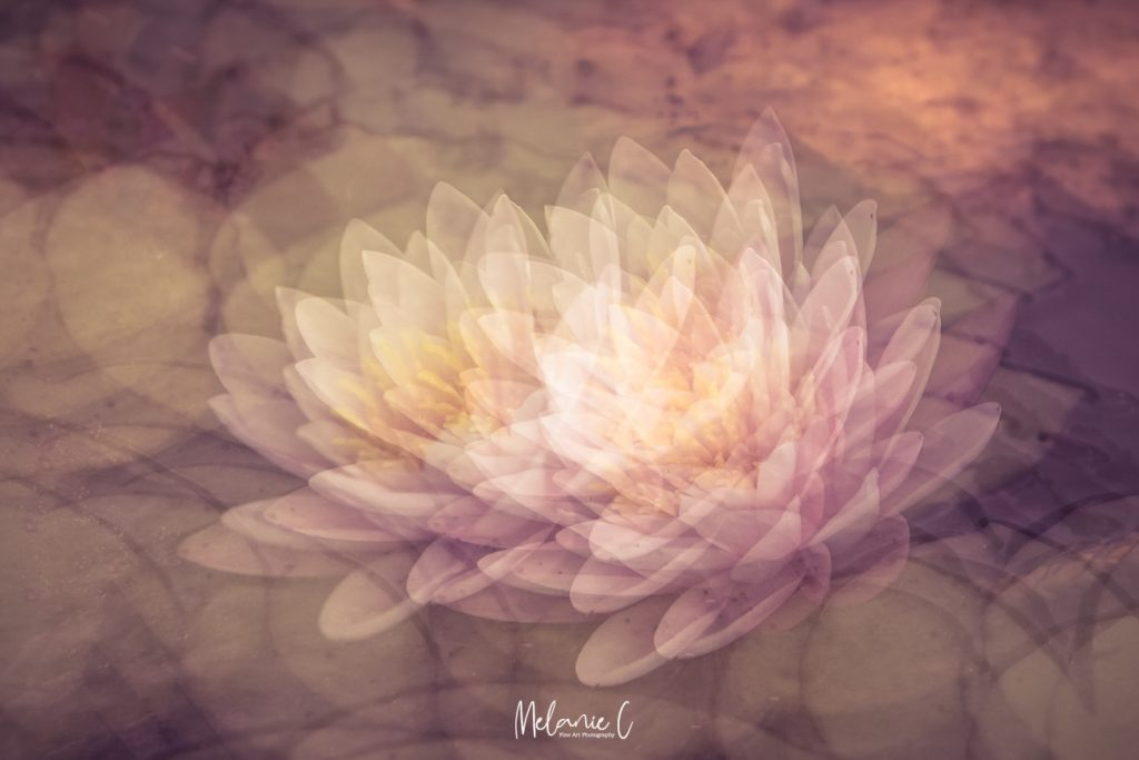 Waterlily camera art
