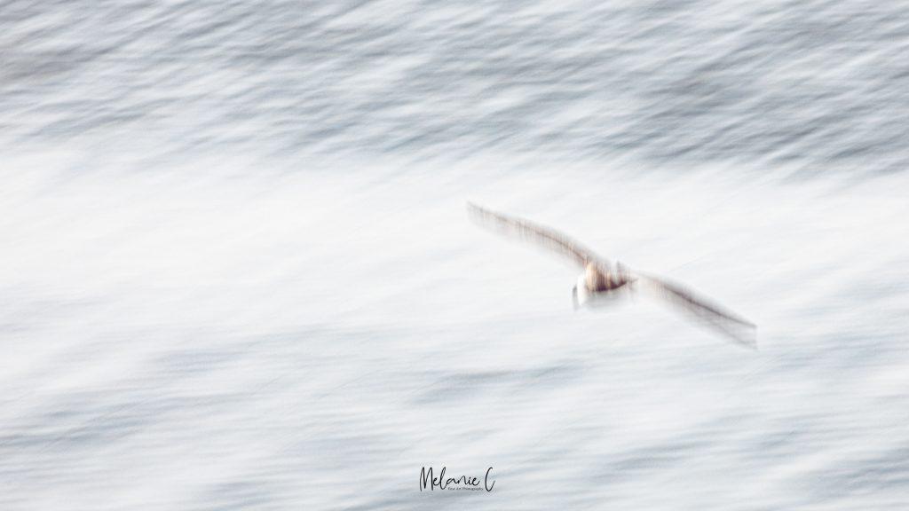 bird over the ocean art