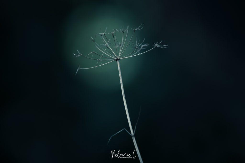 Dead flower Bokeh