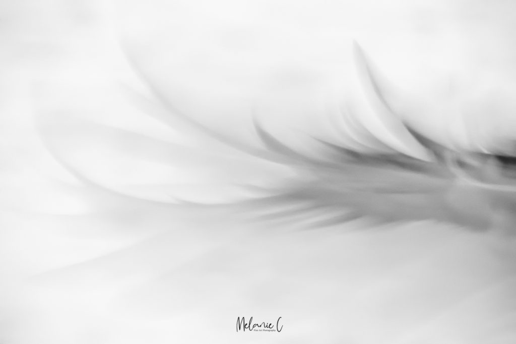 feather movement