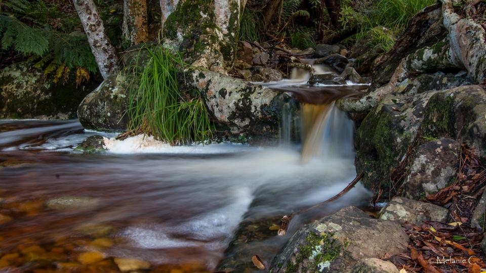 Kirstenbosch stream