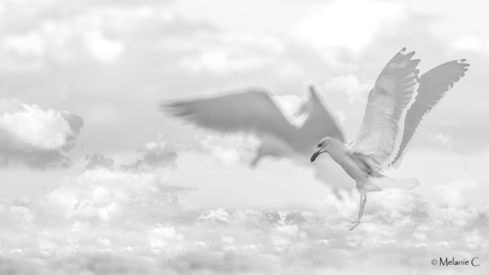 seagull in the clouds