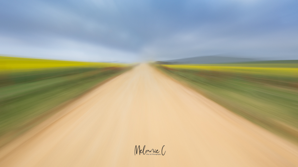 Canola field road