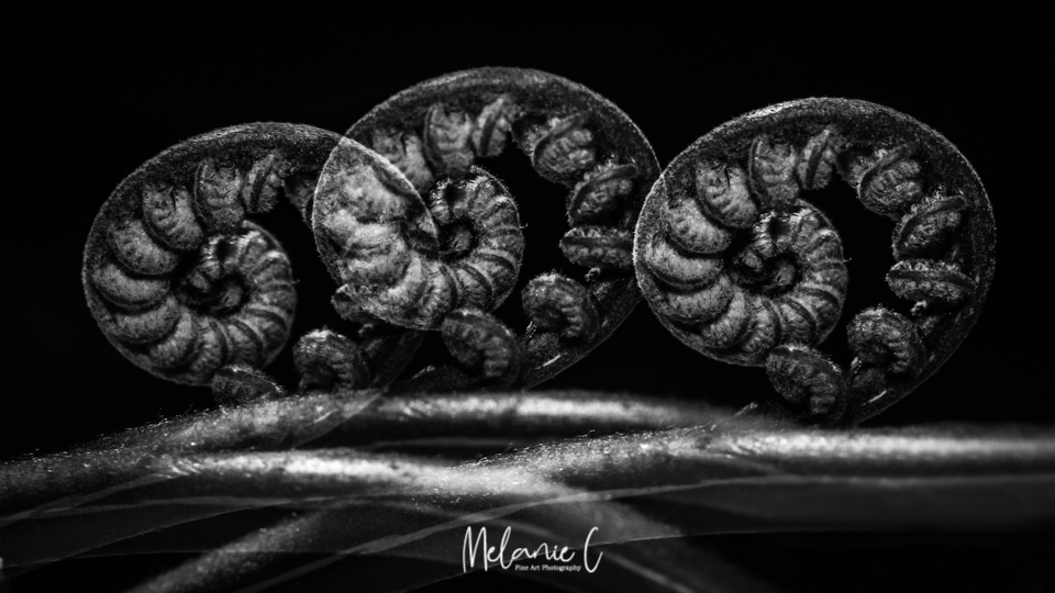 fern multiple exposure art