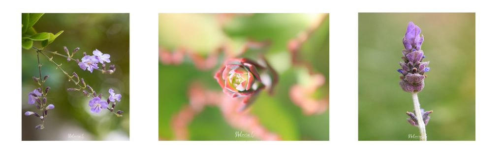 Macrophotography, Nisi, Blog, Flora