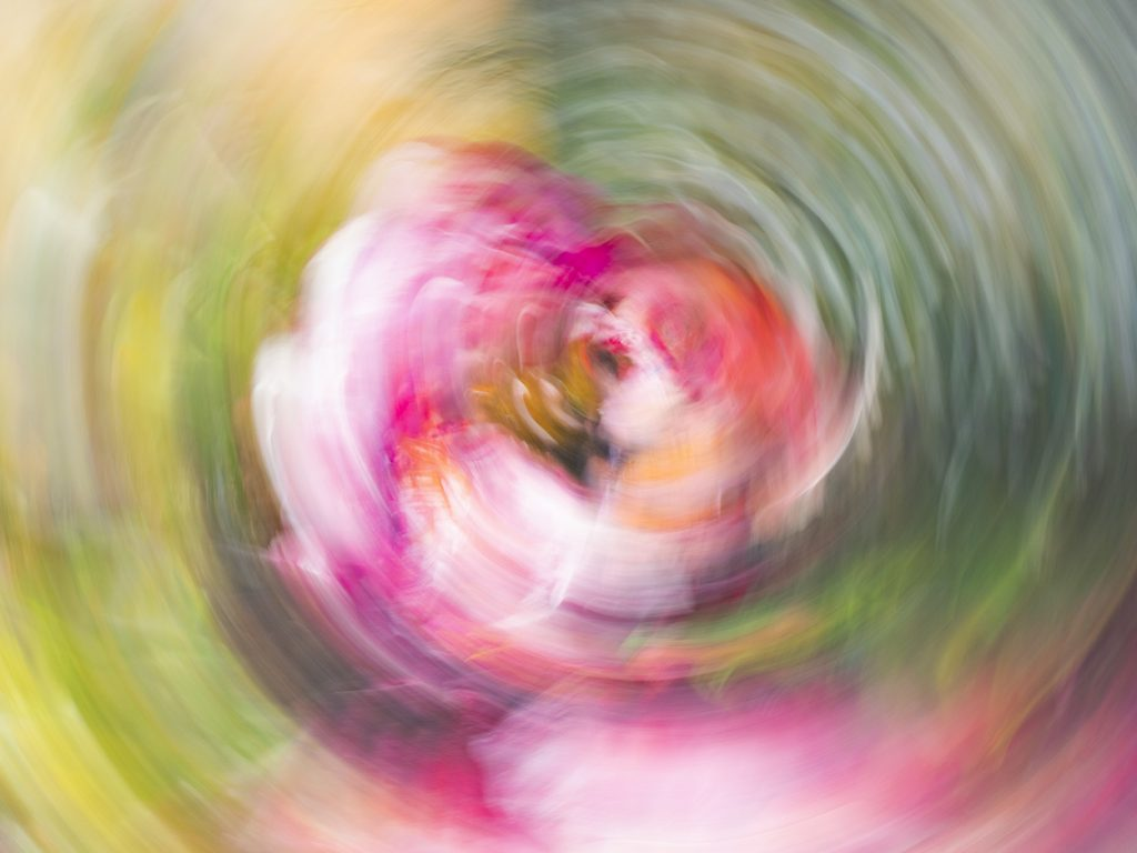 Peonie Flower Abstract